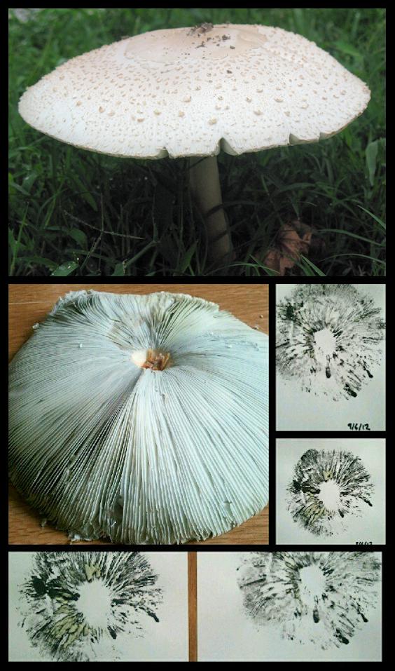 Printing Mushroom Gills