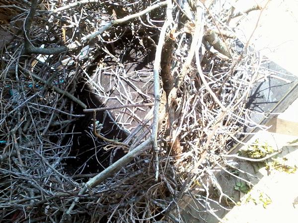 Nest - CHARM APE