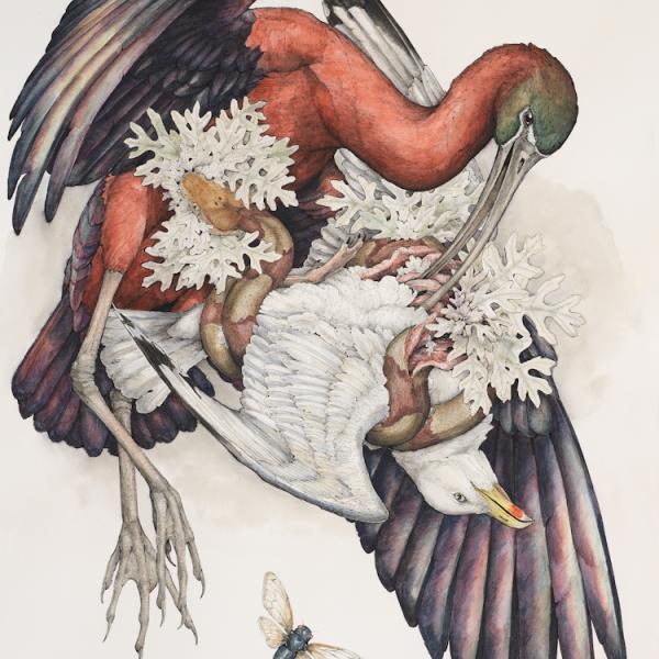 Plegadis Falcinellus by Lauren Marx